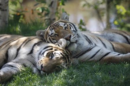 Le Zoo sauvage de St-Félicien